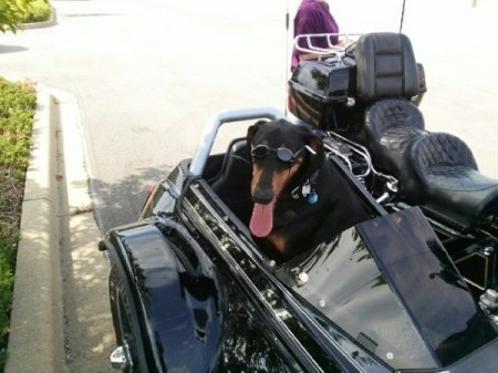 dog in sidecar