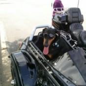 dog in sidecar