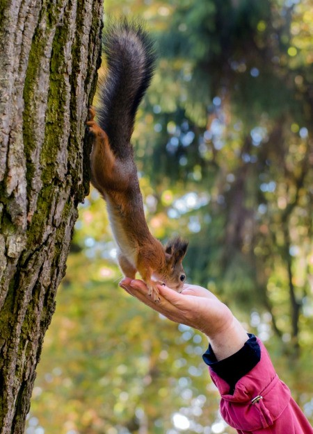 squirrel eating from hand