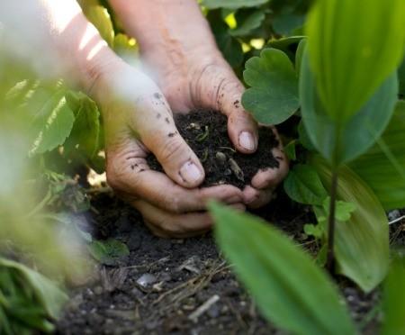 hands full of soil