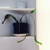 long leaved houseplant