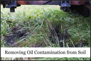 Removing Oil Contamination from Soil