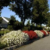 Beautifying Your Boulevard