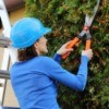 Woman Trimming Hedge on Ladder