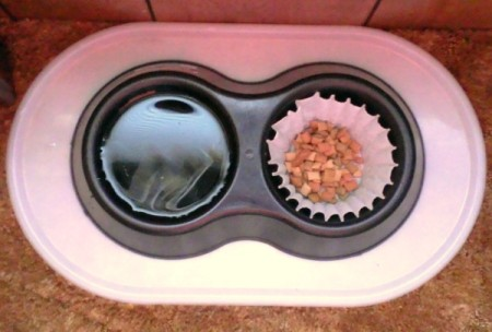 Coffee filter lining a pet dish