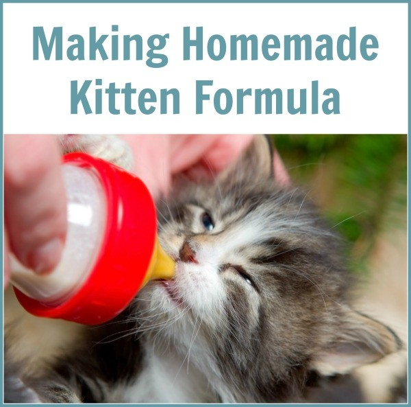 Making Homemade Cat Food