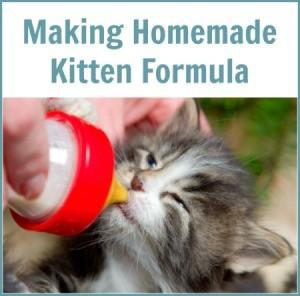 Making Homemade Kitten Formula