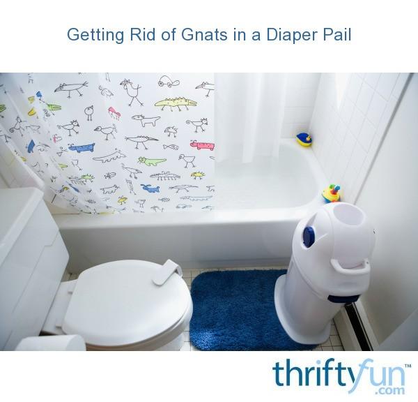 how to keep gnats away