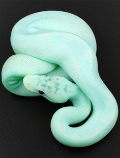 pastel mint green snake