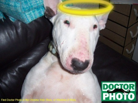 graphic of halo on dog's head in photo