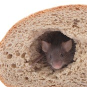 mouse peeking out of a hole in a loaf of bread