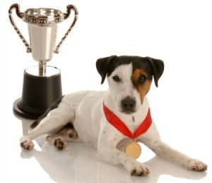 winning dog with ribbon and cup