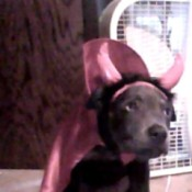Hazel in a devil costume