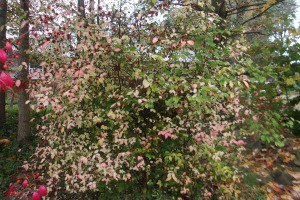closeup of bush