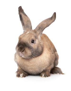 Bunny Losing Its Fur