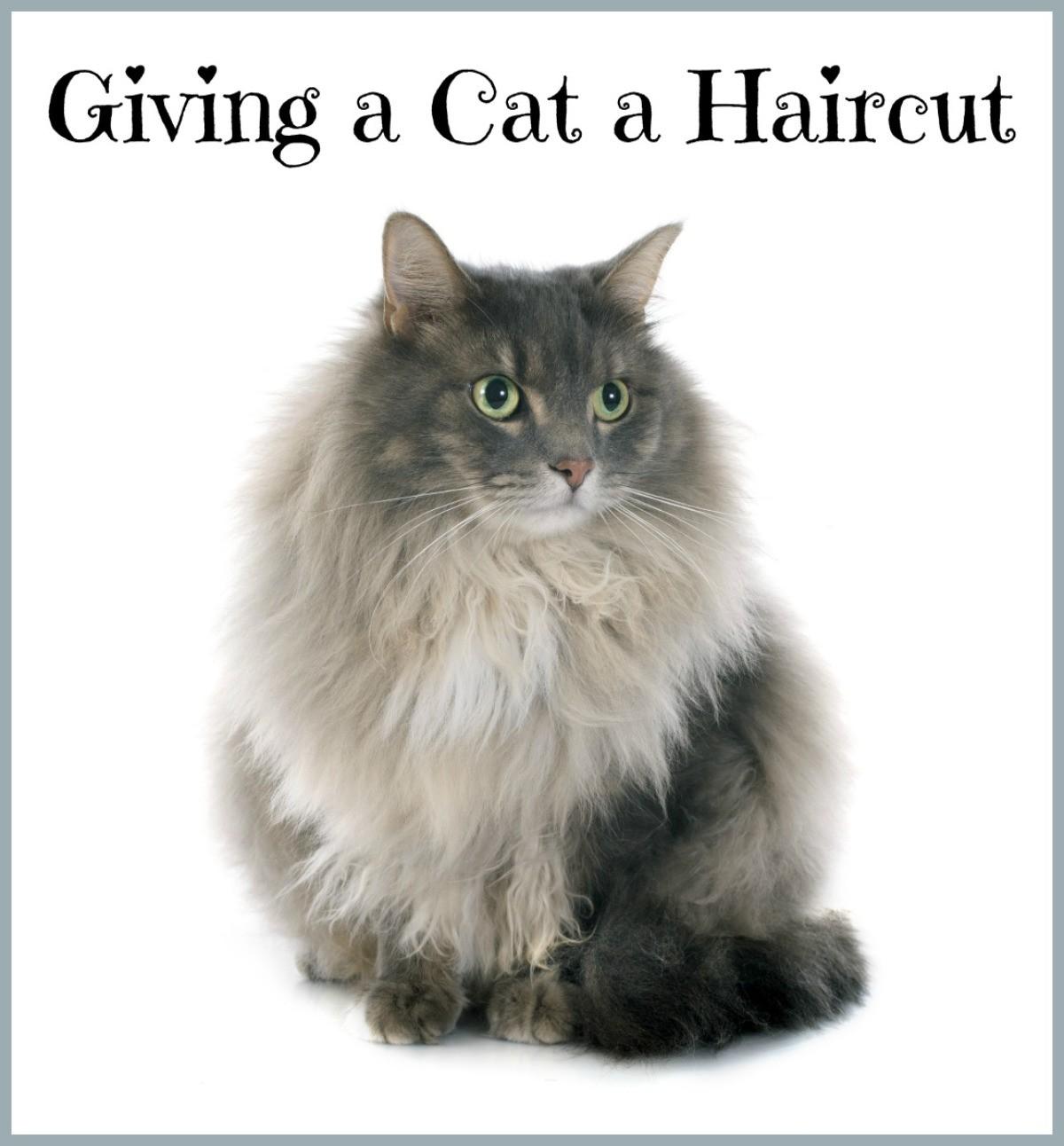 Giving a Cat a Haircut?  ThriftyFun