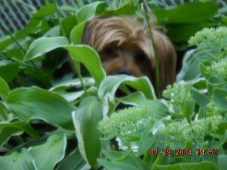 Ziva among the plants