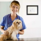 Preventing Heartworms in Dogs