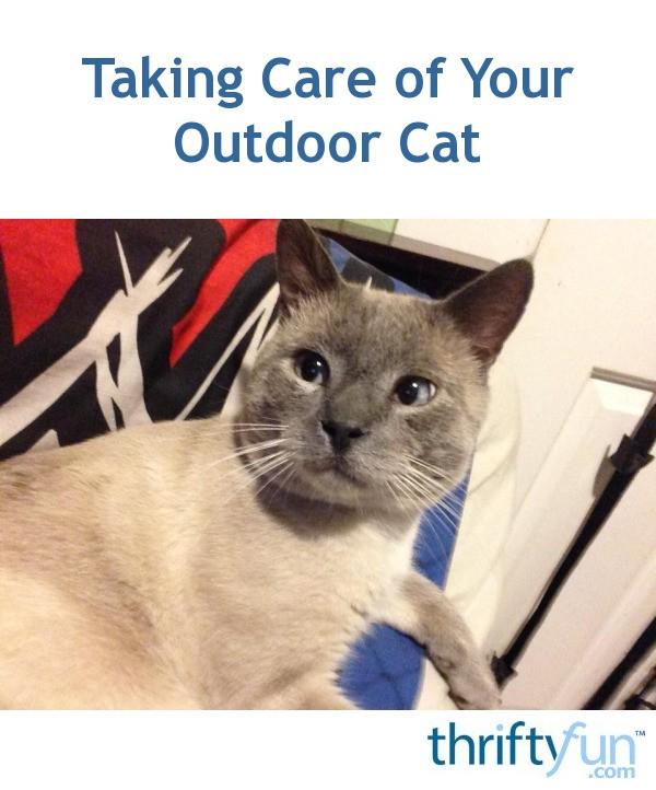 ohio cat mail