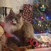 Fuzzy Helping Trim the Tree