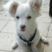 closeup of fuzzy white dog