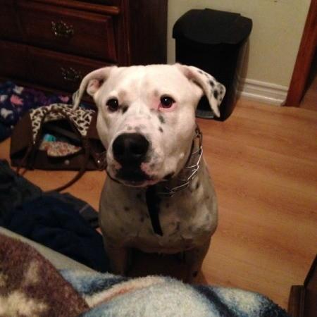 Tyson (Pit Bull)