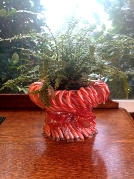 Candy Cane Planter