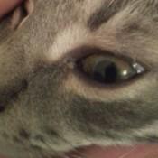 closeup of kitten's eyes