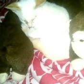 Nina (Cat)