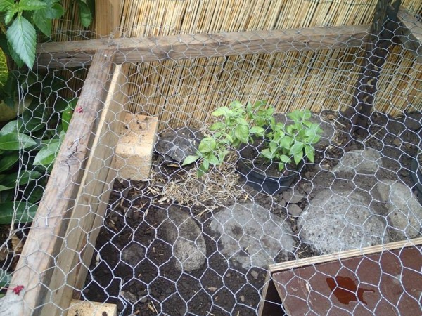 Building a Turtle Home in Your Garden - addition of chicken wire to keep turtle inside
