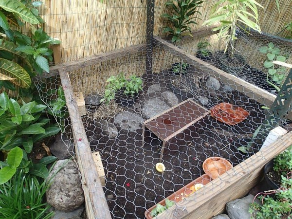 Building a Turtle Home in Your Garden - divided enclosure with rocks on one half and dirt on the other