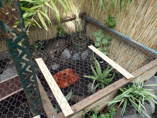 Building a Turtle Home in Your Garden - adding wooden sides to chicken wire so that it can be opened