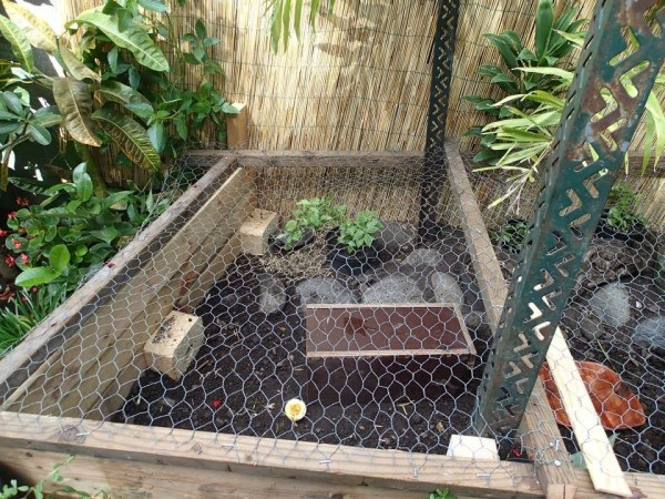 Captivating Building A Turtle Home In Your Garden   Chicken Wire