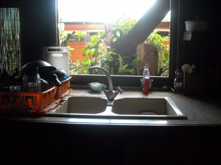 Getting Rid Of Ants In The Kitchen ThriftyFun Enchanting Ants In Kitchen Cabinets