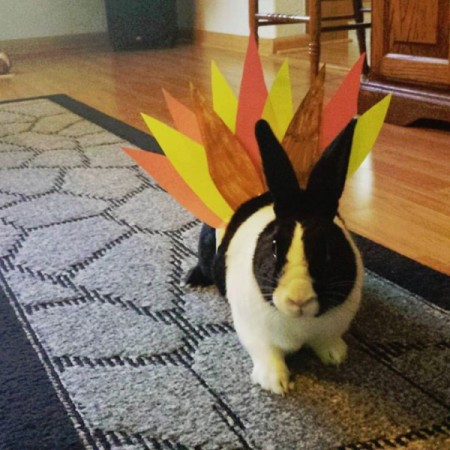 Boo (Dutch Rabbit)