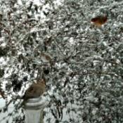 birds in winter butterfly bush