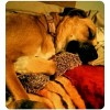 Bailey (Boxer Mix)