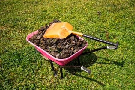 wheelbarrow of horse manure