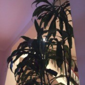 tall houseplant