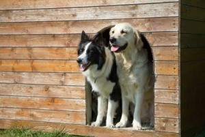 Two dogs looking out the door of a wooden doghouse.