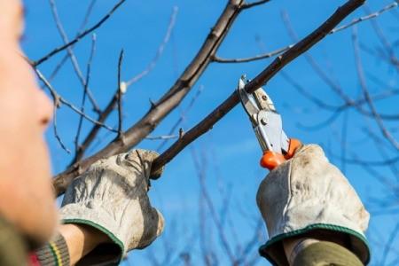 Buying Pruning Tools