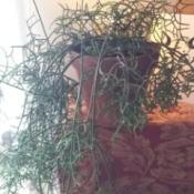 green twiggy plant