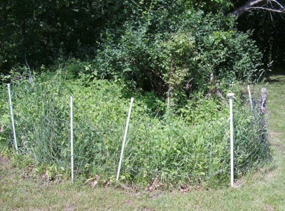 Make Fencing To Keep Pets Out of Garden