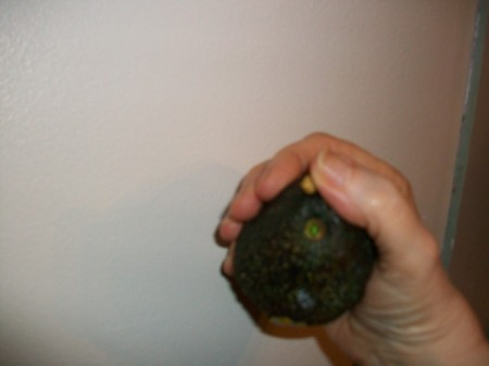 Check if Your Avocado is Ripe