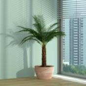 palm near window