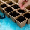Seeds preparing to germinate.