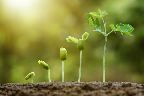 how to get germinating seeds