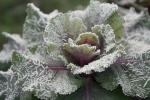 Preparing Your Garden for the First Frost