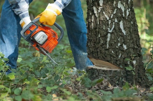 Close Up Of Orange Chainsaw Cutting Down A Tree