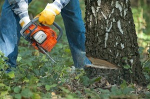 Close-up of orange chainsaw cutting down a tree